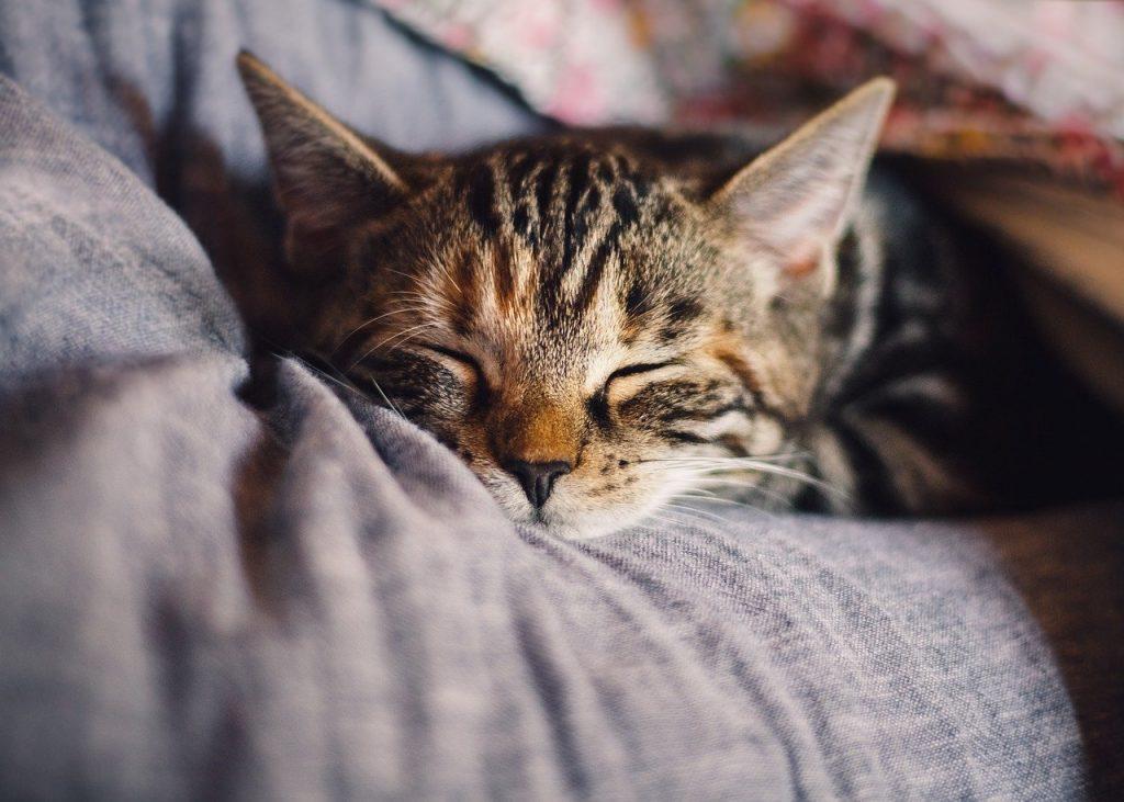 布団にくるまり眠る猫