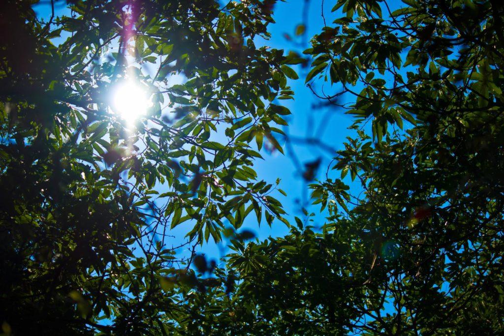 木の葉からみえる夏の日差し_平屋を高断熱・高気密にするメリット|佐藤ホーム